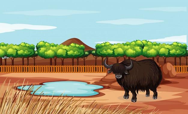 Scène met buffels in de open dierentuin Gratis Vector