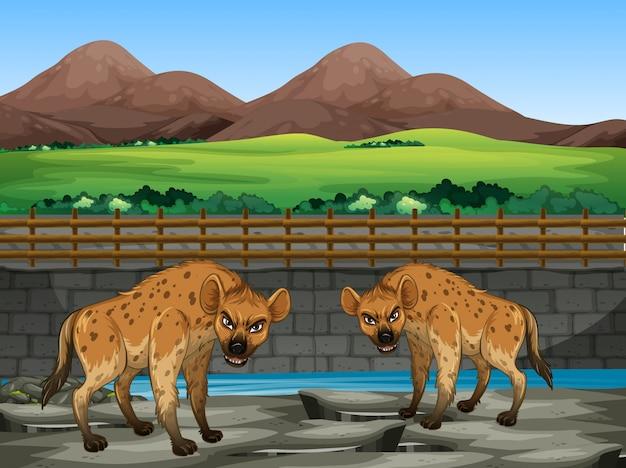 Scène met hyena in de dierentuin Gratis Vector
