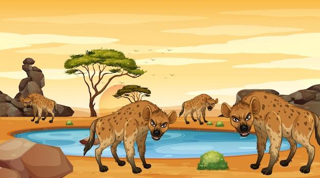 Scène met hyena's in de dersert Premium Vector