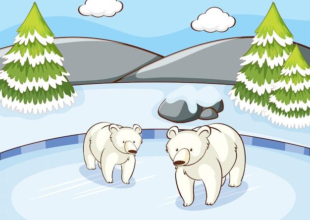 Scène met ijsberen in de winter Gratis Vector