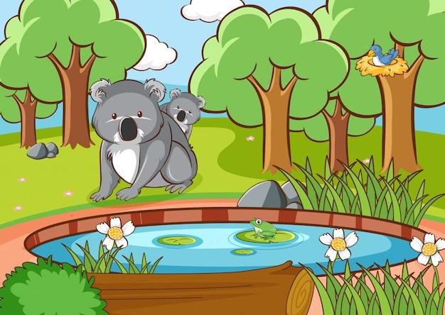 Scène met koala in het bos Gratis Vector