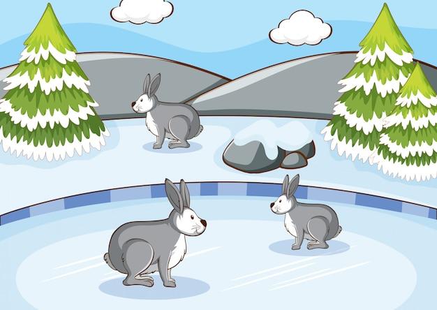 Scène met konijnen op sneeuwberg Gratis Vector