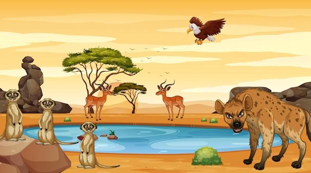 Scène met veel dieren bij de vijver Gratis Vector