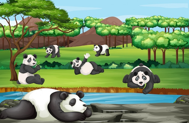 Scène met veel panda's in de open dierentuin Gratis Vector