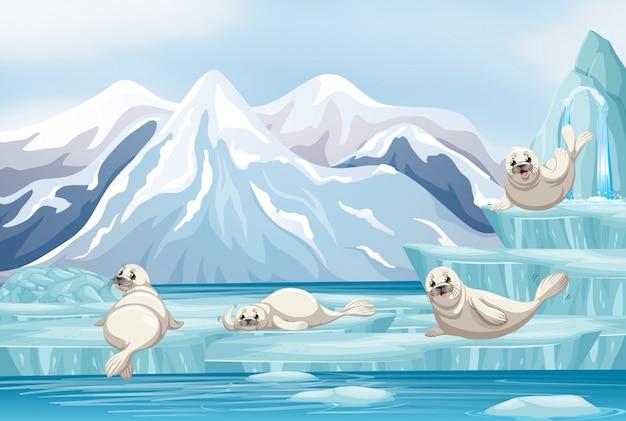Scène met witte zeehonden op ijs Premium Vector