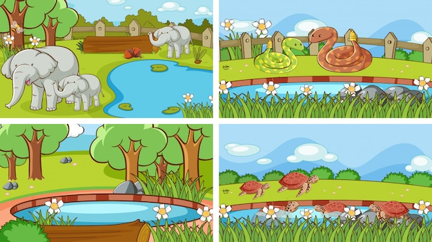 Scènes van dieren in het wild Gratis Vector