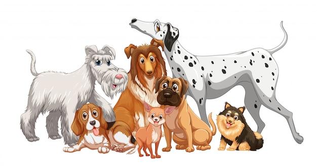 Schattige dieren hond groep geïsoleerd op een witte achtergrond Gratis Vector