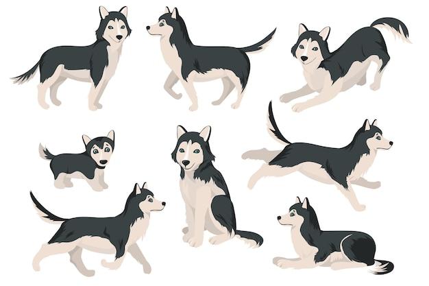 Schattige husky hond in verschillende poses platte set Gratis Vector