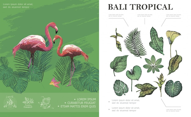 Schets tropisch bali concept met flamingo's mooie palm banaan monstera philodendron frangipani bladeren en planten Gratis Vector