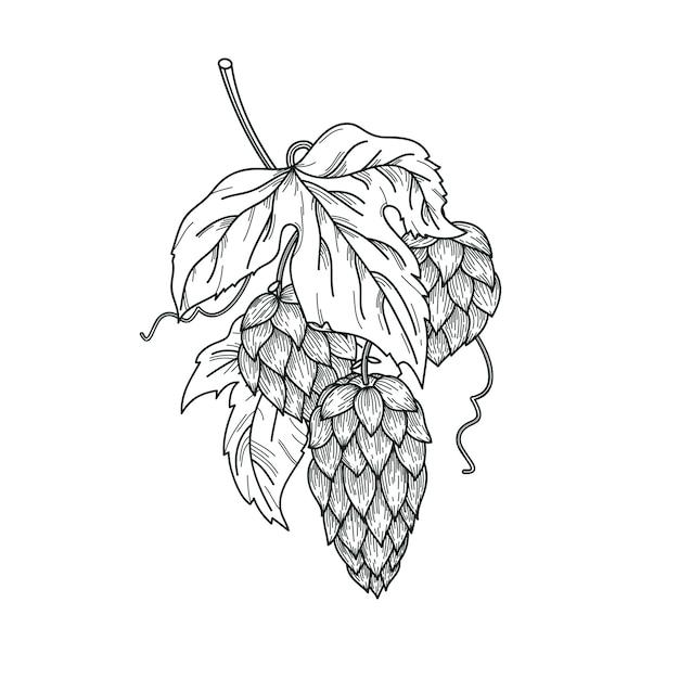 Schets van hopplant, hoptak met bladeren en hopbellen in gravurestijl. hop vector geïsoleerde samenstelling. Premium Vector