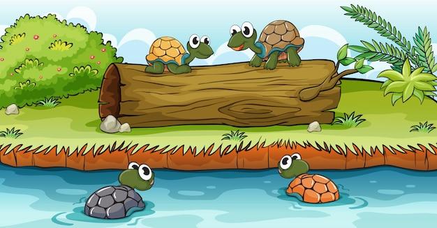 Schildpadden op water en log Gratis Vector