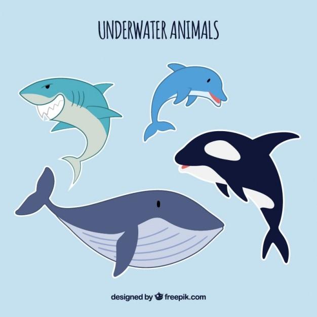Sea life dieren Gratis Vector