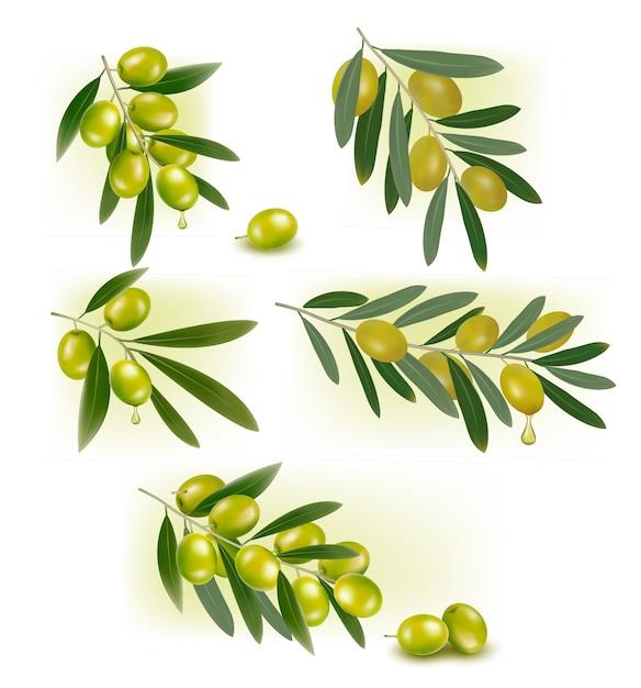 Set achtergronden met groene olijven Premium Vector