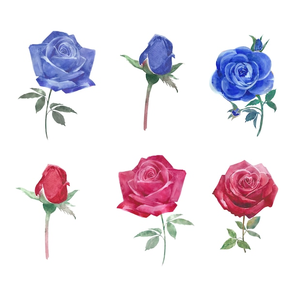 Set aquarel levendige rozen, handgetekende illustratie van elementen geïsoleerd wit. Gratis Vector