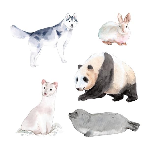 Set aquarel ontwerp konijn, panda, hermelijn illustratie van. Gratis Vector