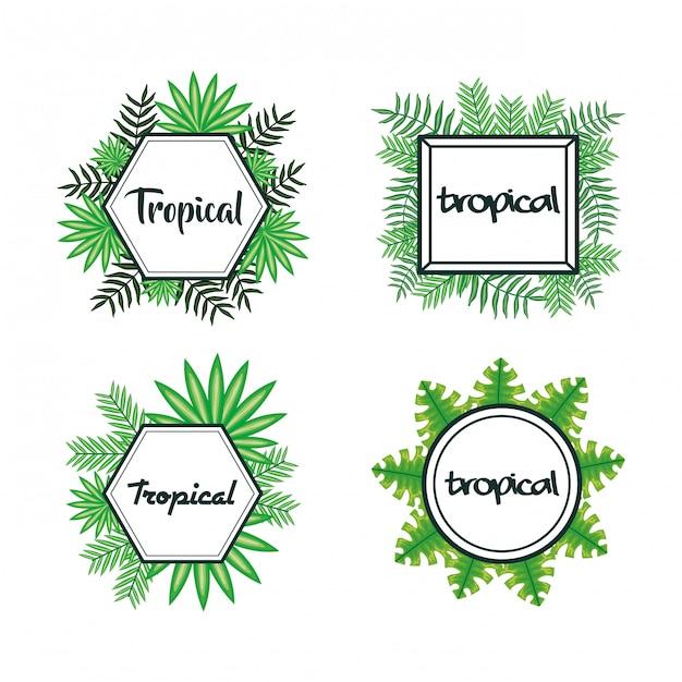 Set frames met tropische bladeren Premium Vector