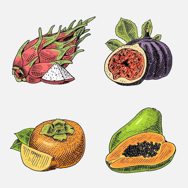 Set hand getrokken, gegraveerd vers fruit, vegetarisch eten, planten, vintage ogende vijgenboom, kaki en pitaya, papaja. Premium Vector