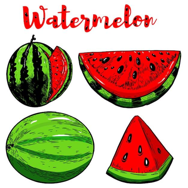Set hand getrokken watermeloen illustraties op witte achtergrond. elementen voor poster, menu, flyer. illustratie Premium Vector