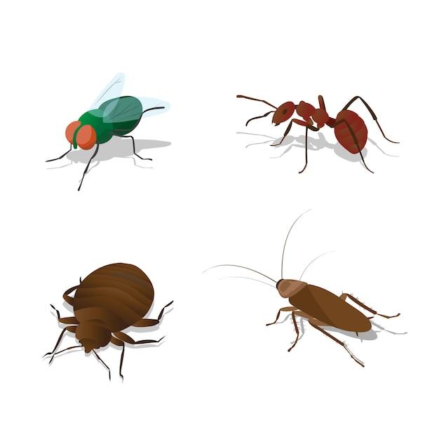 Set illustraties insecten Premium Vector