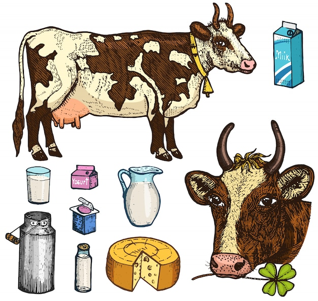Set melkvoeding, zuivelproducten, yoghurt en kaas, ijs, fles, kruik, boter en opgeklopte milkshake. koe, blik, land of rustieke boerderij, gezonde voeding. gegraveerde hand getekend in oude schets. Premium Vector