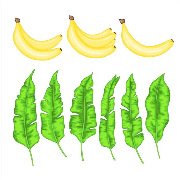 Set met bananen en bananenbladeren Premium Vector