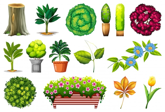 Set sierplanten Gratis Vector