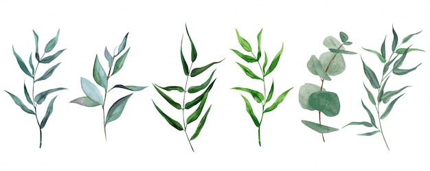 Set van aquarel bladeren en takken, hand getrokken groen collectie Premium Vector