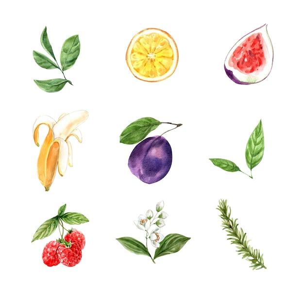 Set van aquarel gebladerte en fruit Gratis Vector
