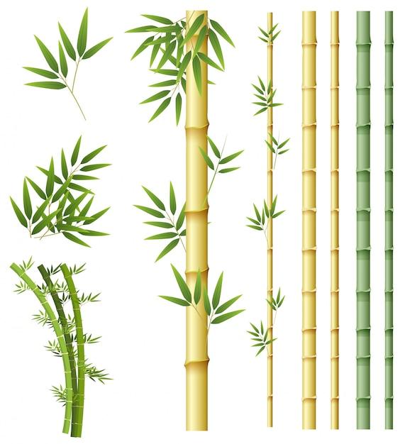 Set van bamboe plant Premium Vector