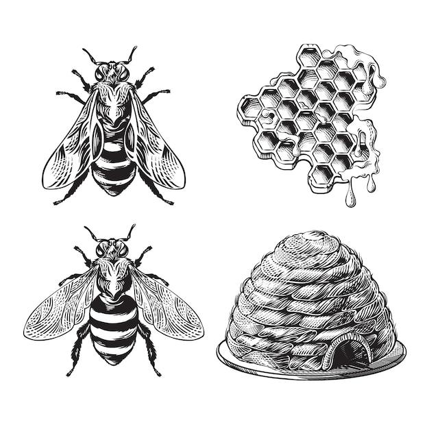 Set van bijen, wesp, honingraten, bijenkorf vintage tekening Gratis Vector
