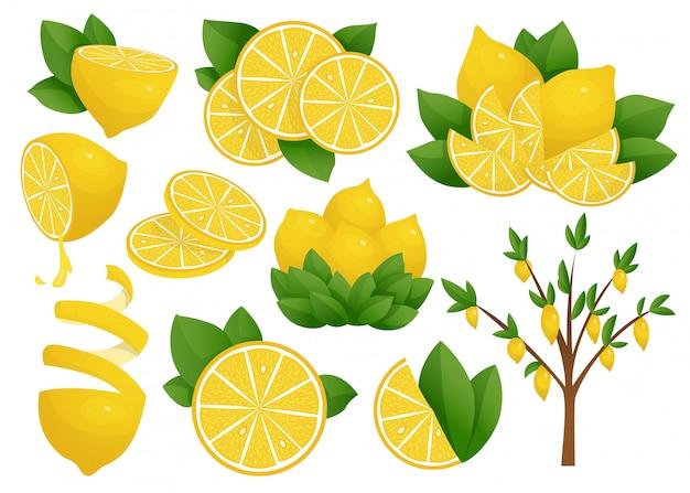 Set van citroen slice. citroenboom. verse zure citroen. Premium Vector