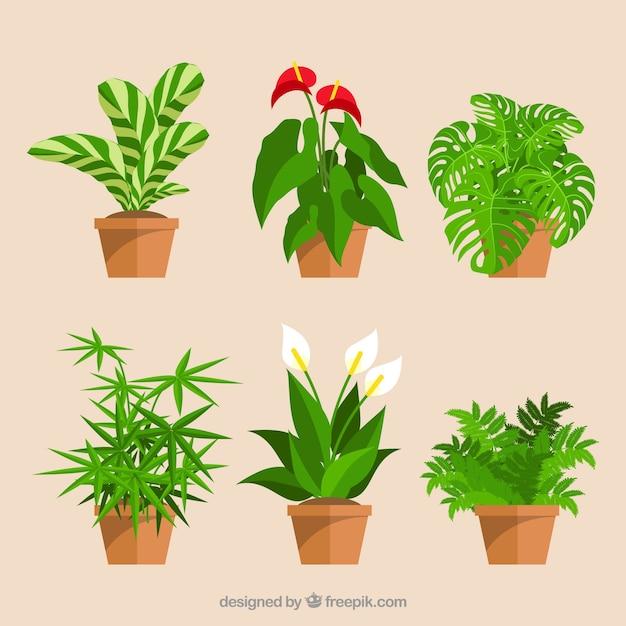 Set van decoratieve bloempotten en bloemen Gratis Vector