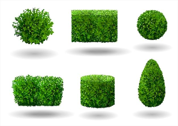Set van decoratieve planten Premium Vector