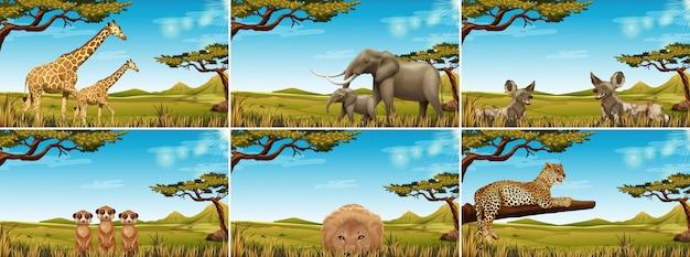 Set van dieren in het wild in de savanne Gratis Vector
