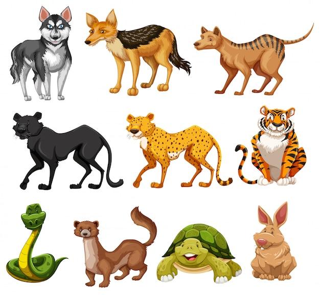 Set van dieren karakter Gratis Vector