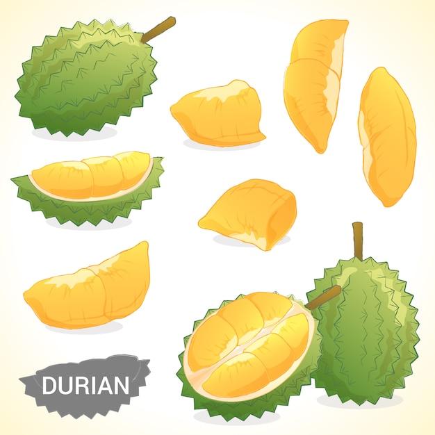 Set van durian in verschillende stijlen vector-formaat Premium Vector