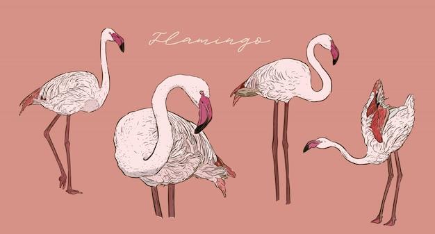 Set van flamingo, hand tekenen schets vector. Premium Vector