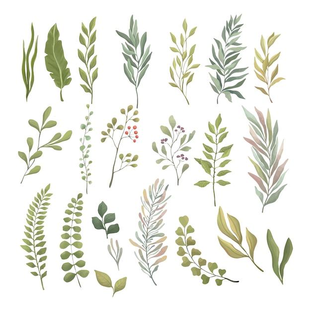 Set van groene bladeren en takken. groen en fris zomergebladerte voor de krans, de rand, het behangontwerp. Premium Vector