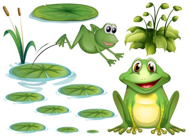Set van groene kikker en waterlelie Gratis Vector