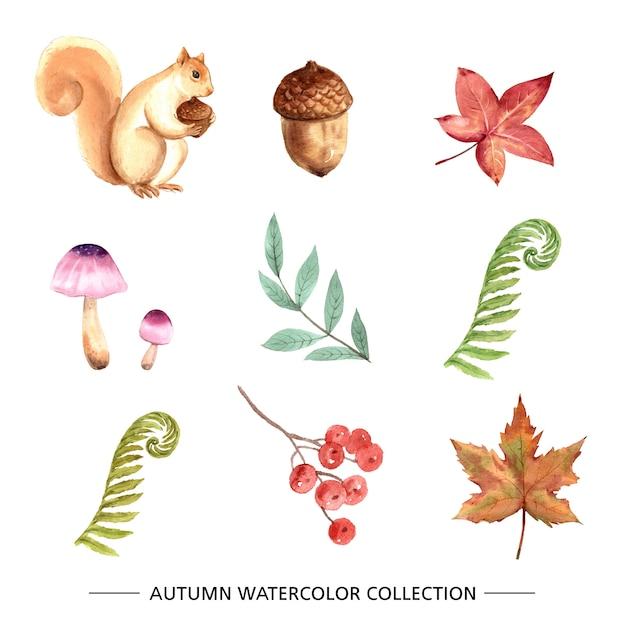 Set van herfst element aquarel Gratis Vector