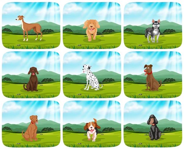Set van honden in park scène Gratis Vector