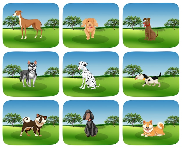 Set van hondenras in de natuur Gratis Vector