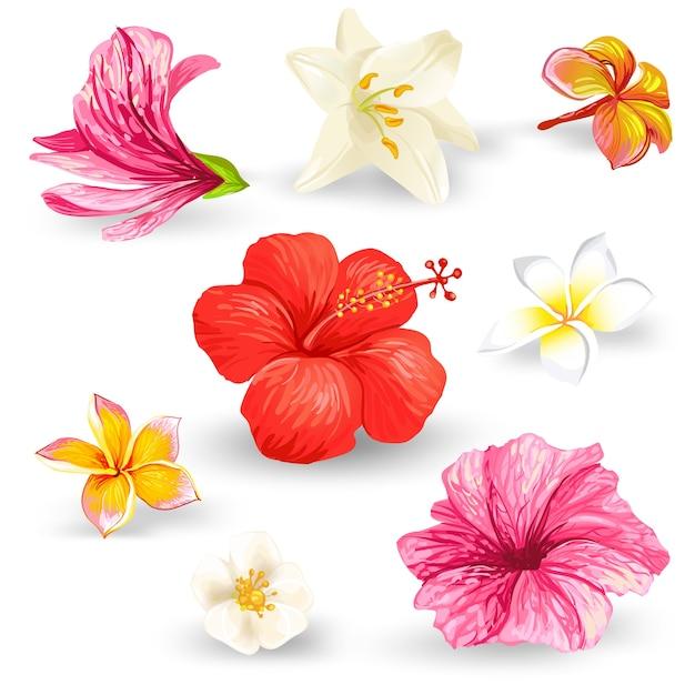 Set van illustraties van tropische hibiscusbloemen. Gratis Vector
