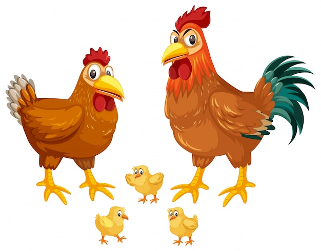 Set van kippen witte achtergrond Premium Vector
