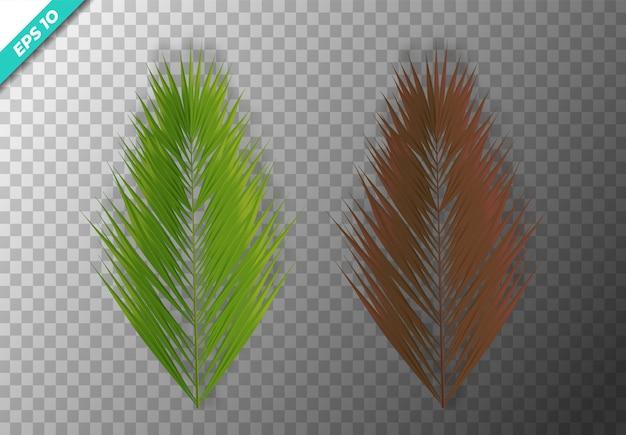 Set van kokosnoot blad. vector illustratie. Premium Vector