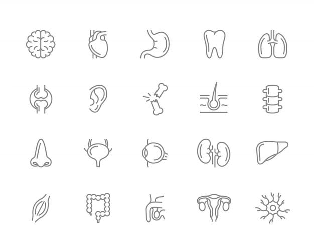 Set van menselijke organen lijn iconen. neuron, penis, baarmoeder, darm en meer. Premium Vector