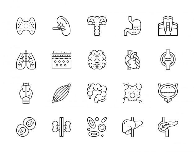 Set van menselijke organen lijn iconen. Premium Vector