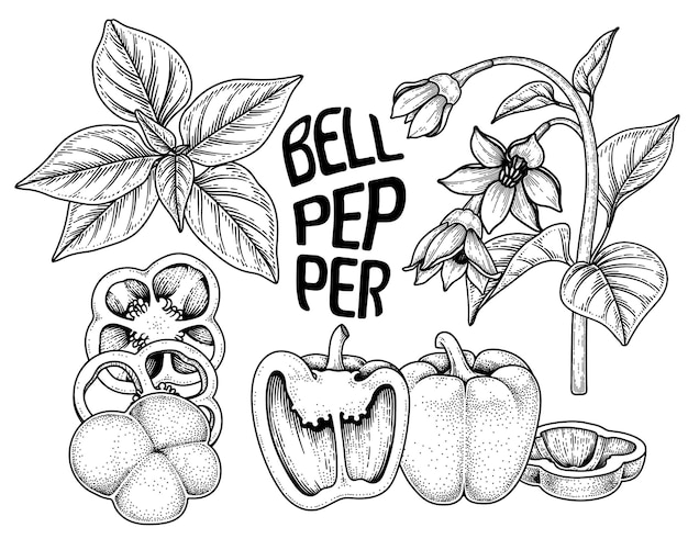 Set van paprika hand getrokken elementen botanische illustratie Gratis Vector