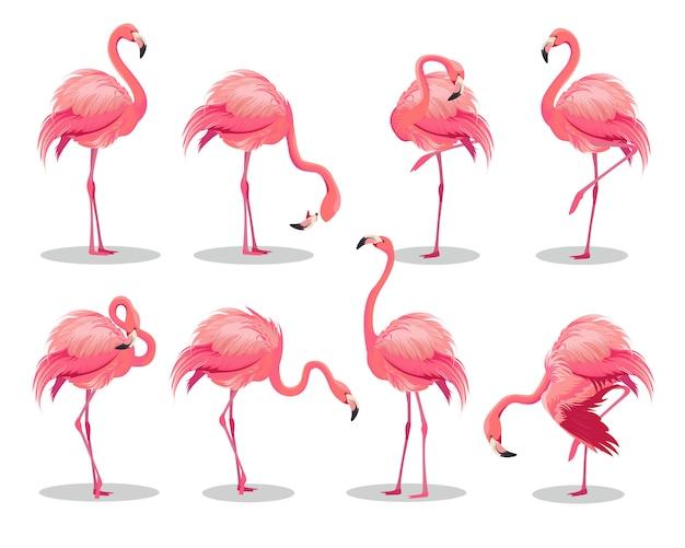 Set van realistische roze flamingo's. exotische vogels in verschillende poses Premium Vector