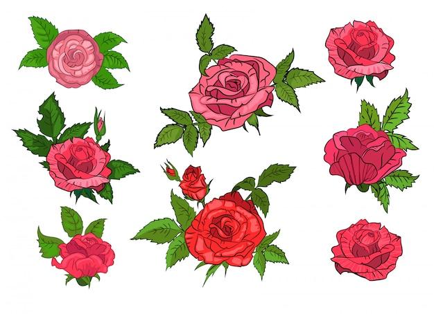 Set van rode rozen op geïsoleerde achtergrond Gratis Vector